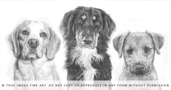three dogs portrait drawing