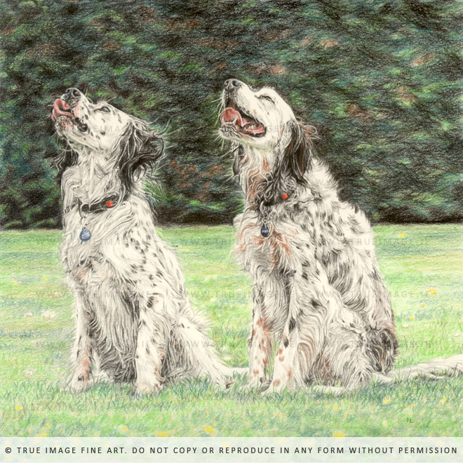 dalmatians coloured pencil drawing