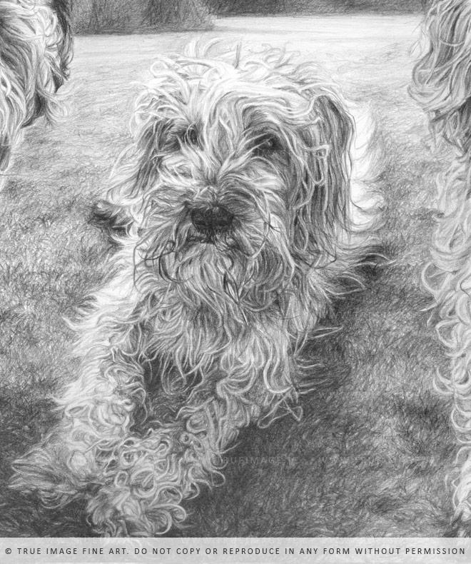 wheaten terrier portrait
