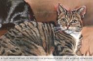 portrait of a cat detail
