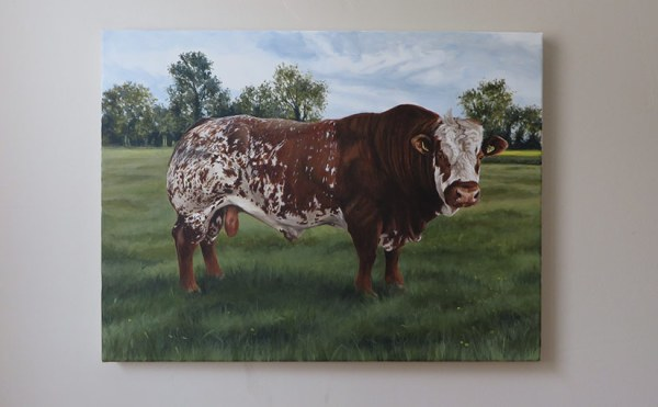 simmental bull portrait