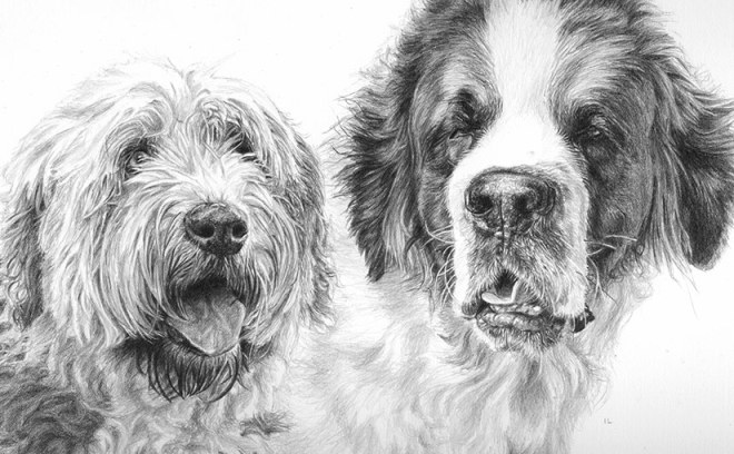 dog portrait of terrier and st bernard
