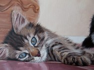tabby kitten painting detail