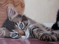 tabby kitten painting detail