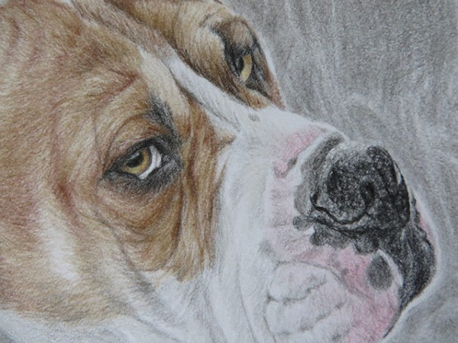 boxer drawing detail
