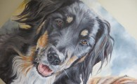 collie painting detail