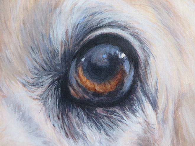 dog eye painting detail