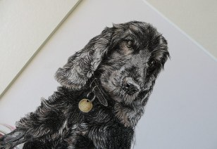 cocker spaniel dog portrait detail