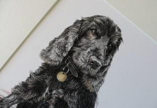 cocker spaniel dog portrait detail