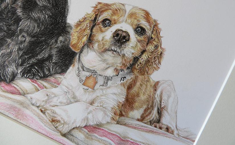 king charles cavalier dog portrait detail