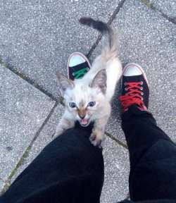 He Was Walking In The Park When A Kitten Stopped Him To Ask A VERY Important Question…