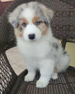 Fluffy Pup <3