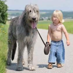 Watch Little kids and their big dogs! <3