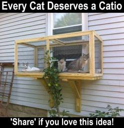 A screened in patio for cats!   Had to share! (Y)