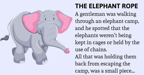 An Elephant cannot break a Rope – Inspiring Story