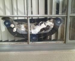 Best Cat Hammock :)