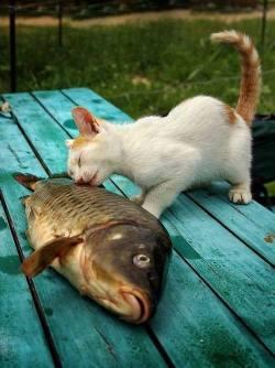 I love you fishy ^^