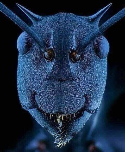 The face of an ant under an electron microscope. :o