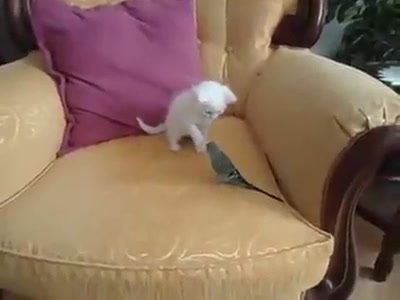 Too cute and playful!!