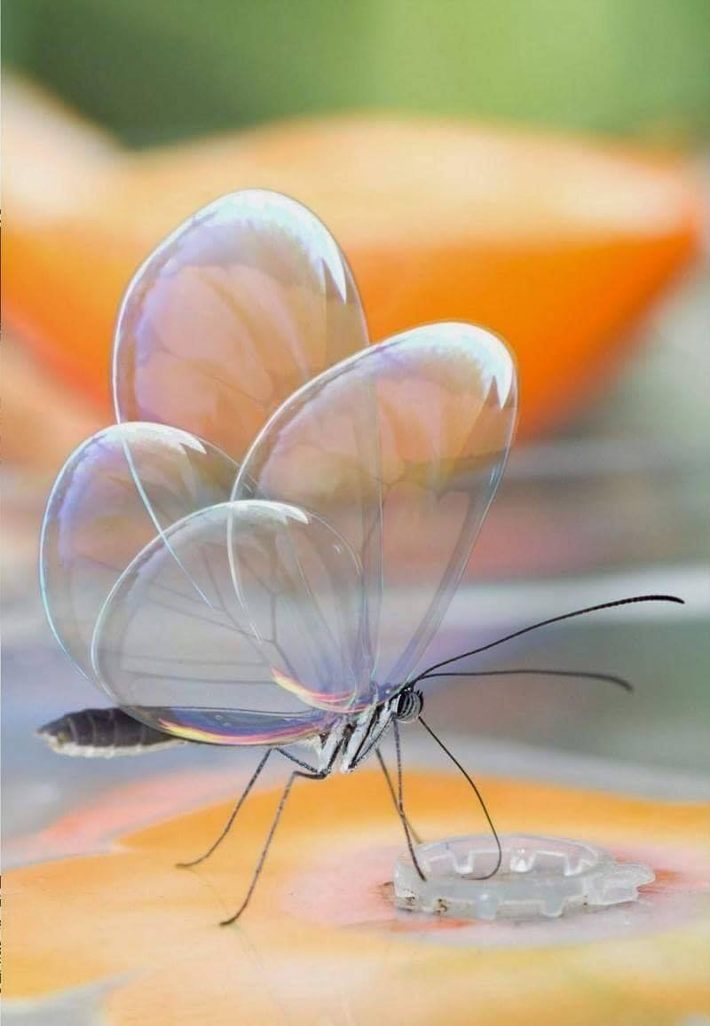 Translucent butterfly … the wings look like glass bubbles. :o