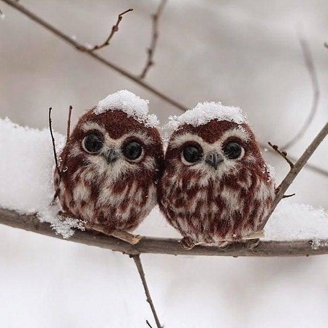 Two cute little owls, Biysk Russia.