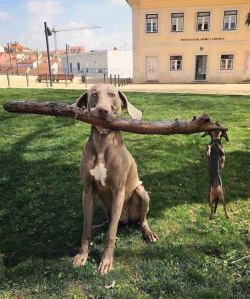 """""""Branch Manager and Assistant Branch Manager…"""""""