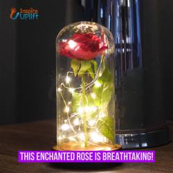 Enchanted Rose Flower Lamp 🌹