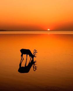 The sunset dream scene  Alberta, Canada