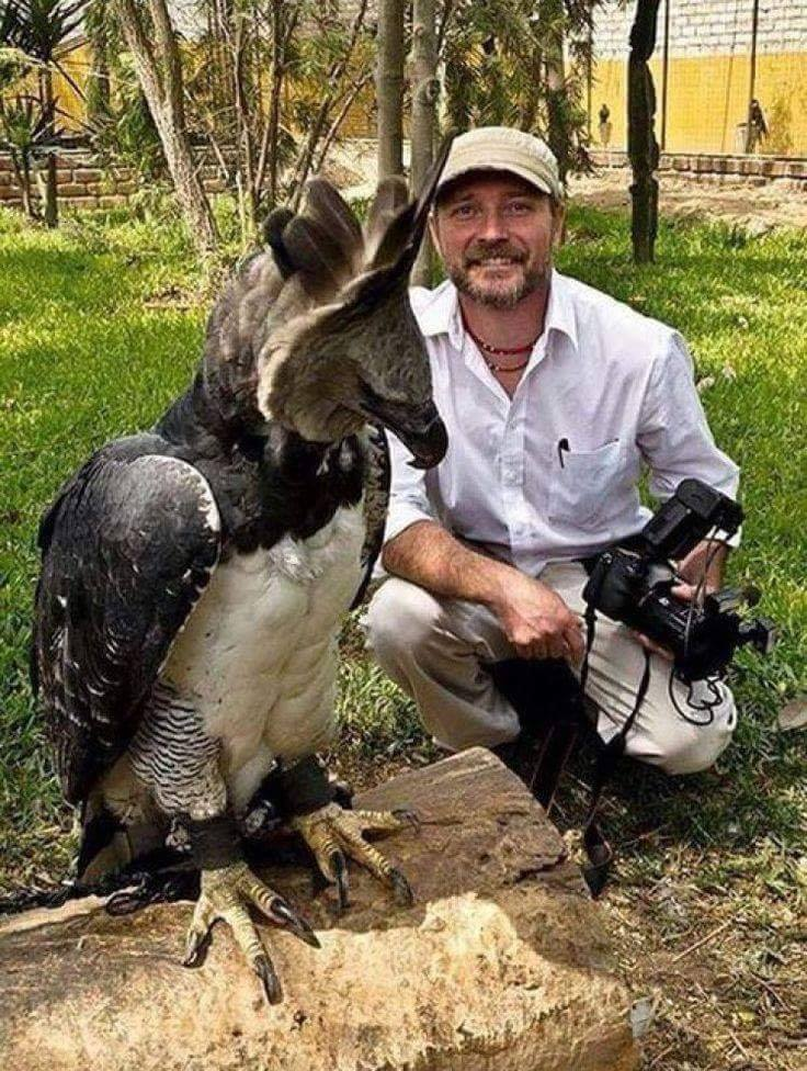 This is a Harpy Eagle, the largest eagle in the world! <3