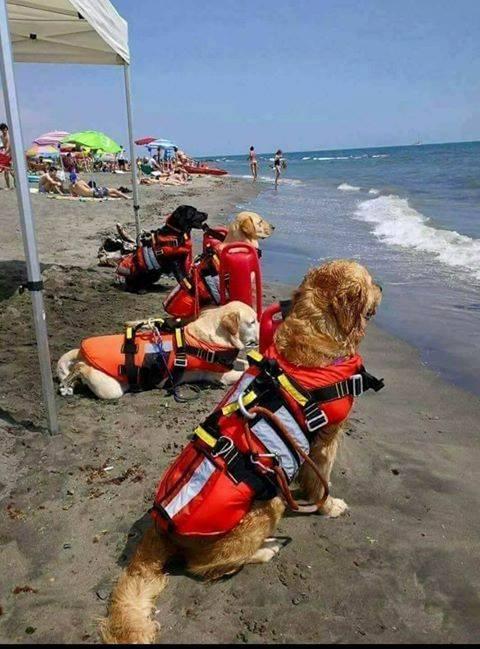 Life Guard dogs at a Croatian beach