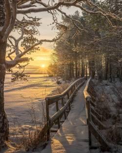Morning light on a winter pathway  Landön, Strömsund, Sweden.