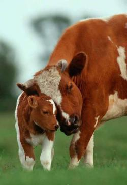Mother's Beautiful and Pure Love.