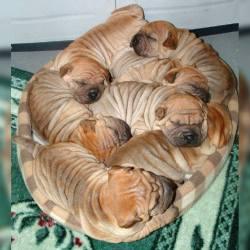 """Cinnamon rolls…"""