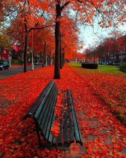Autumnal portrait Amsterdam, Netherlands.