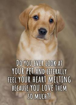 Do you love your Pet? :)