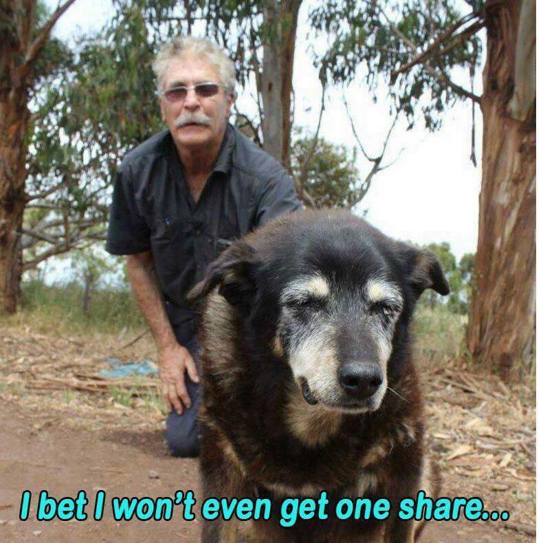 Goodbye Maggie, the Australian kelpie who may just be the world's oldest dog' dies a ...