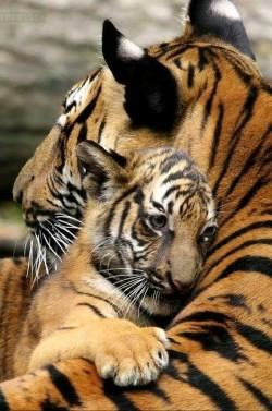 Mother's love!! <3
