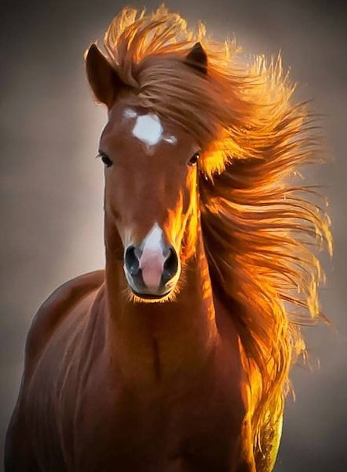 """""""Probably the most photogenic horse in the world…"""""""