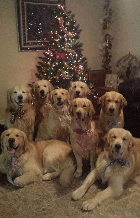 Ready for Christmas.