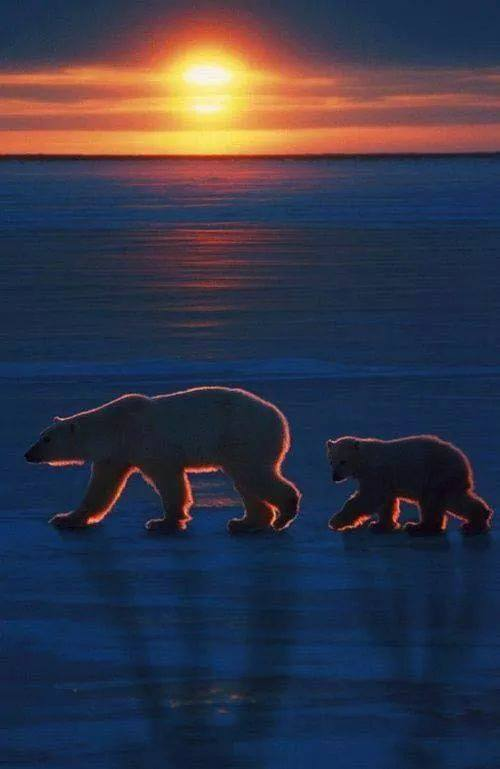 Sunset in the North Pole <3 <3