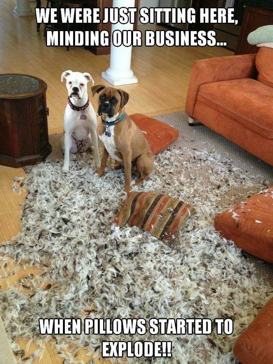 We were just sitting here, minding our business..  When pillows started explode!!