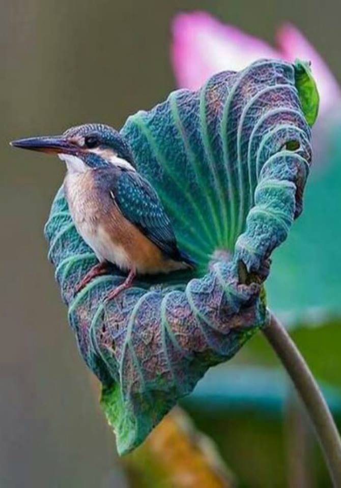 What a beautiful photo composition of a kingfisher! <3