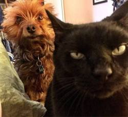 When your cat is plotting to kill you and your dog is trying to warn you!