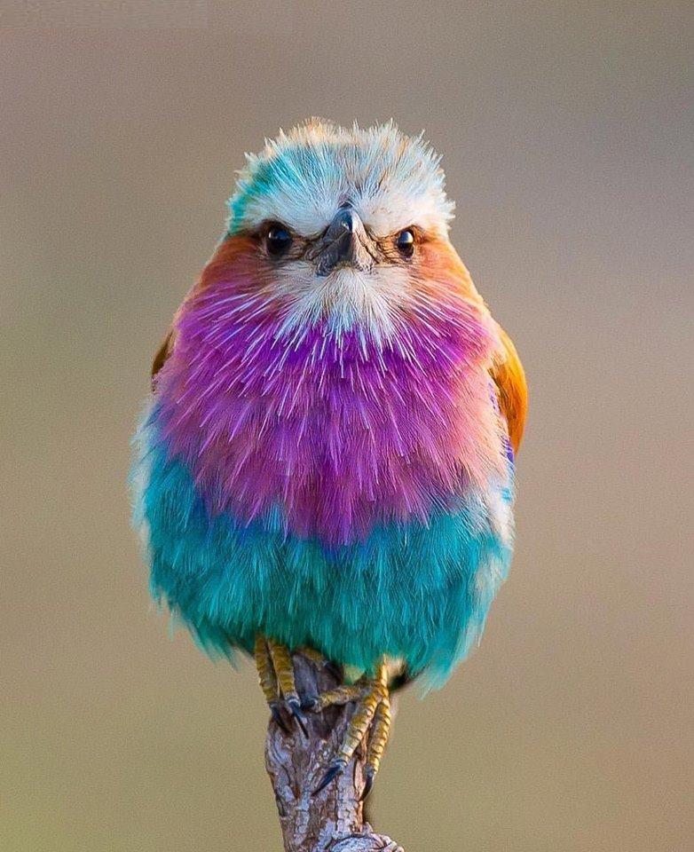 Wow! Amazing Bird