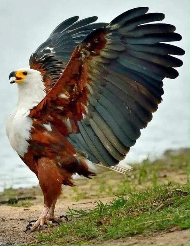 Wow! Majestic Eagle :o