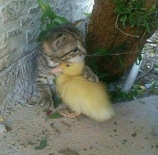 Friendship conquers all differences