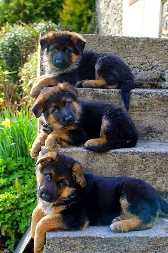 From 1 to 10 how cute are they? :)