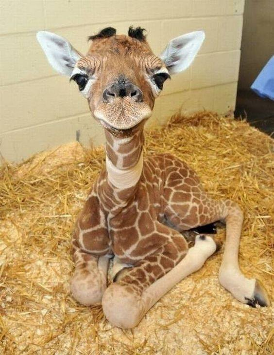 One word for this baby giraffe? :)
