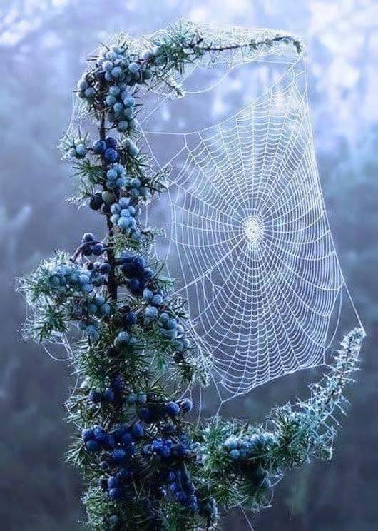Spider's Dreamcatcher