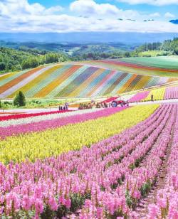 Who's ready for spring  Hokkaido, Japan